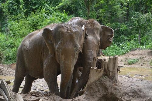 tourisme éléphant